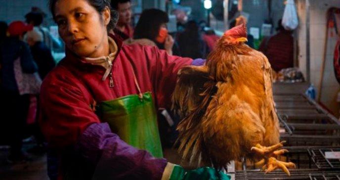 Las cinco epidemias causadas por virus de animales que afectan a humanos