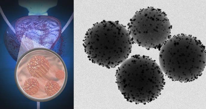 Así se mueven millones de nanorrobotos dentro de ratones vivos