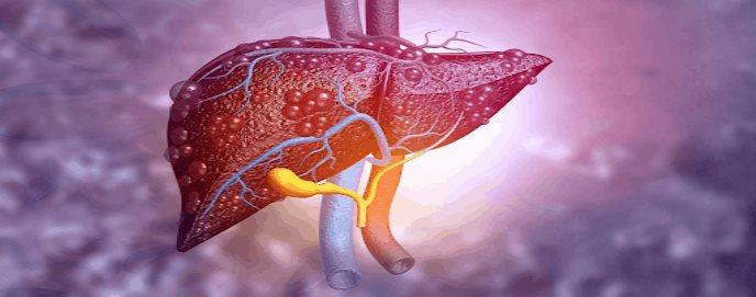 Identifican mecanismos moleculares para evitar el fallo hepático