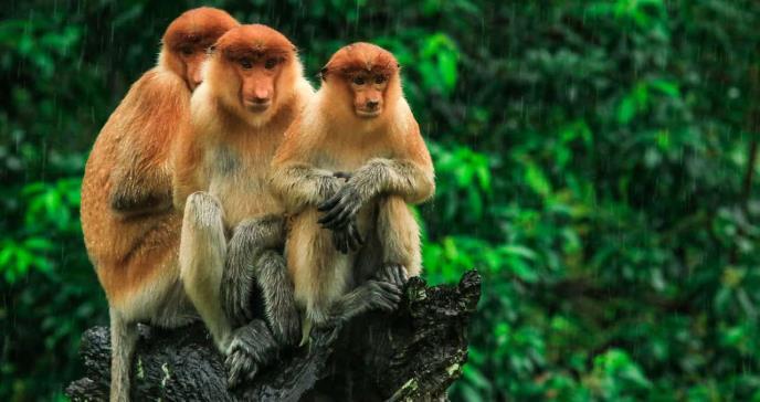 Así es el extraño virus del mono B: síntomas y complicaciones de la enfermedad