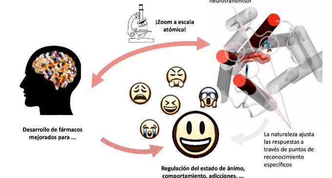 Así es el mecanismo que desencadena la respuesta neuronal en el cerebro